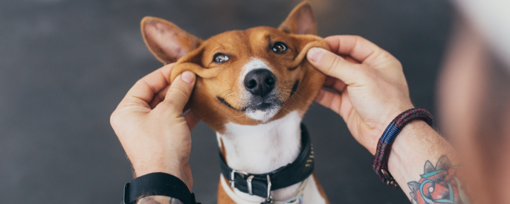 How Dogs Adapted to Be Our Best Friends