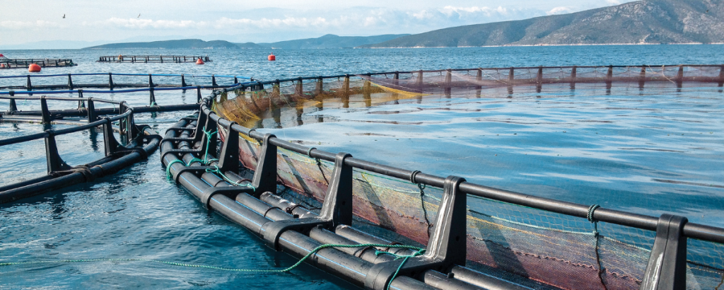 The Green Benefits of Fish Farming