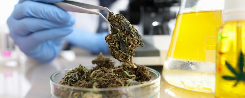 The Strange History of Cannabinoids