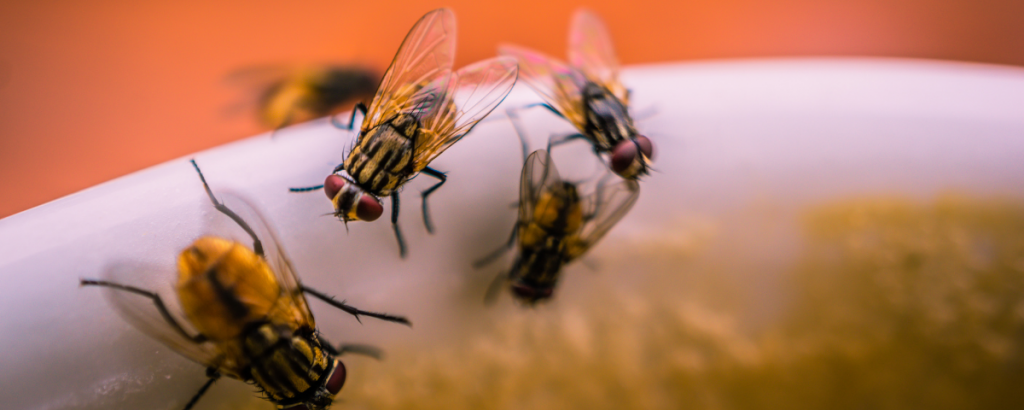 Why Flies Are So Annoyingly Persistent